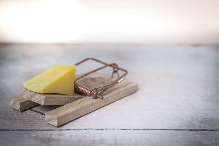 7 debt consolidation traps to avoid - mousetrap with cheese